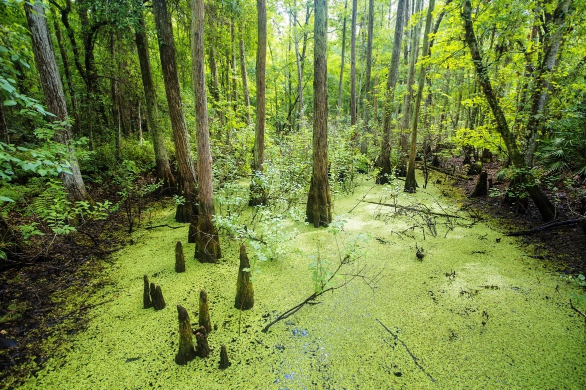 Florida-Everglades.jpg